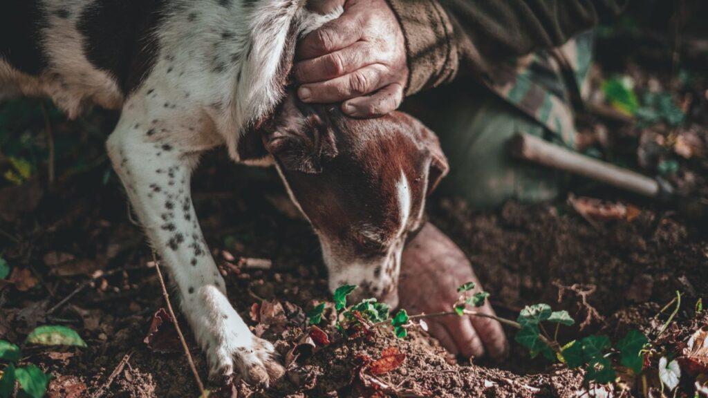 tartufo-trovare-cane